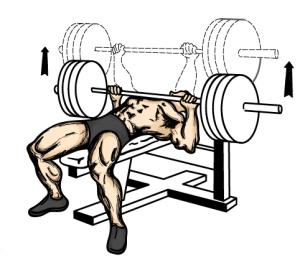 bench_press
